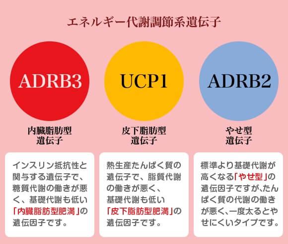 diet_shidou1-2